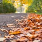 autumn_fall_leaves_on_the_road_768x500_b